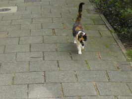 12-09-15 Unknown Cat by Herdervriend