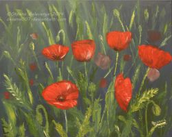 Red poppies by Oksana007