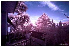 Infrared by jordygraph