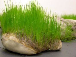 Grass Pillow - image 1 by claire-dix