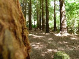 Through the Redwood Trees by BeyondLawliet88