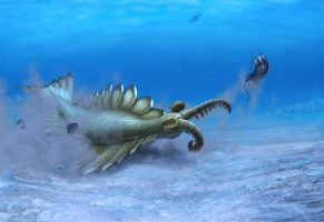 Anomalocaris canadensis by Olorotitan