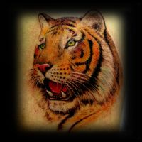 Tiger tattoo by ErdoganCavdar