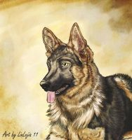 German Shepherd by bobocatllj