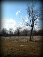 More field by ShreepPhotography