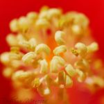 Stamens by ironmanbr