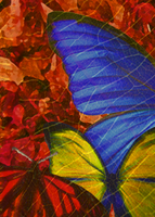 Triadic Butterfly by Pencil13