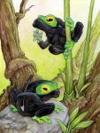 Ninja Frogs by ursulav