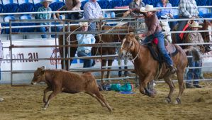 STOCK 2013 Rodeo-89 by fillyrox