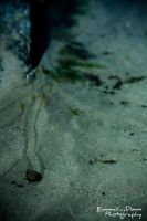 Sea Snail on the move. Day 168 - 17/06/13 by oEmmanuele
