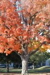 2014 Natural Autumn Color 23 by Miss-Tbones