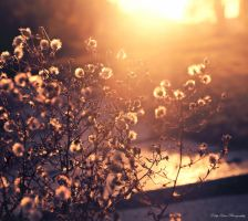 Say Hello to Sunshine by MyLifeThroughTheLens