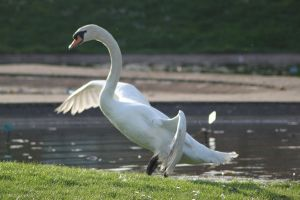 Swan 34 by CitronVertStock