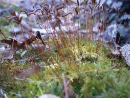 MOSS-SCAPE VII by zraclooc