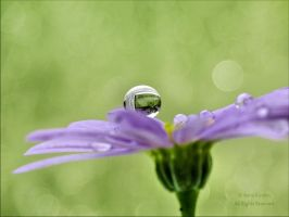 After the rain II by AnnaKirsten