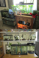 My Fish Tanks by KasaraWolf