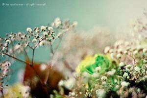bokeh by Livelys