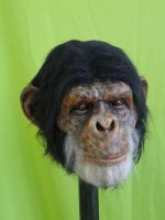 CHIMPANZEE by chuckjarman