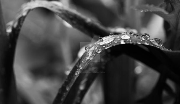 Leaves and rain. by Atelierdeux