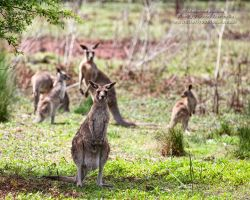 For My Overseas Friends by FireflyPhotosAust