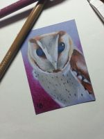 Southern bay owl ACEO by Leftblind