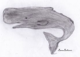 Sperm Whale by BamaBelle2012
