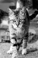 Street Cat by Doroty86