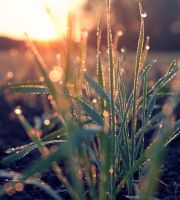 Dewdrops In The Morning by shehera-Zade
