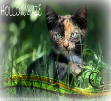 Hollowgaze photo edit by Wings-of-Cinder