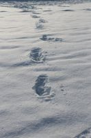 Foot in the snow by Martynutia1LT