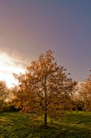 One Tree among hundreds by Dynnnad