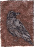 Quoth the Raven... by mbchickenleg
