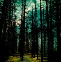 forest grudge by floripecampii
