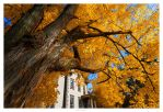 white house and a tree by garrit