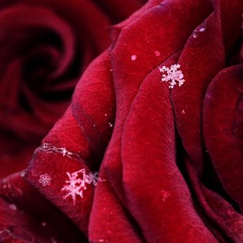 First snowflakes with love by Floriandra
