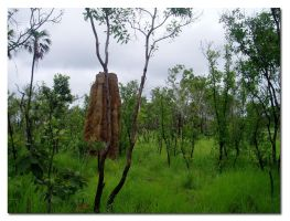 A Home Amoung The Gum Trees by aeoleo
