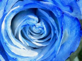 . Roses are Blue, Violets are Red + by JohnstonColleen