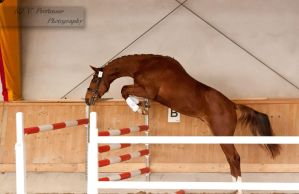 Freejumping Championship 2014_65 by CalyHoney
