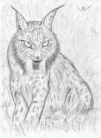 Lince iberico by ThereIsNoVoid