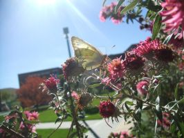 Butterfly in the Sun by HalfTalent082690