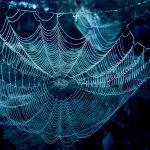 Web by rosaarvensis