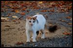Stray Cat by MauserGirl