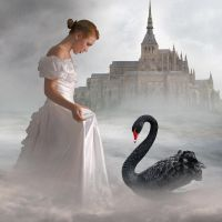 Black Swan by amiens