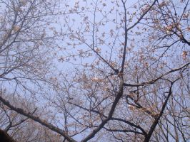 late bloomers by plainordinary1