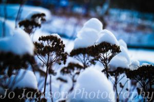 Crowned with snow 4 by Britwitch-1981