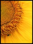 Sunny Side Up by louiecablouie