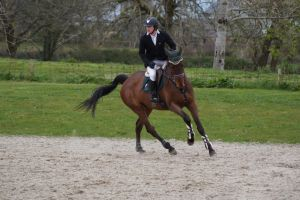 Bay horse - Show jumping stock  2.10 by MagicLecktra