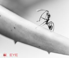 Ant by FoxeyePhoto