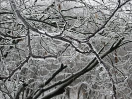 Ice covered tree 2 by Lily-Marie