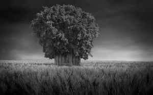 Black and white by At0micDrag0n